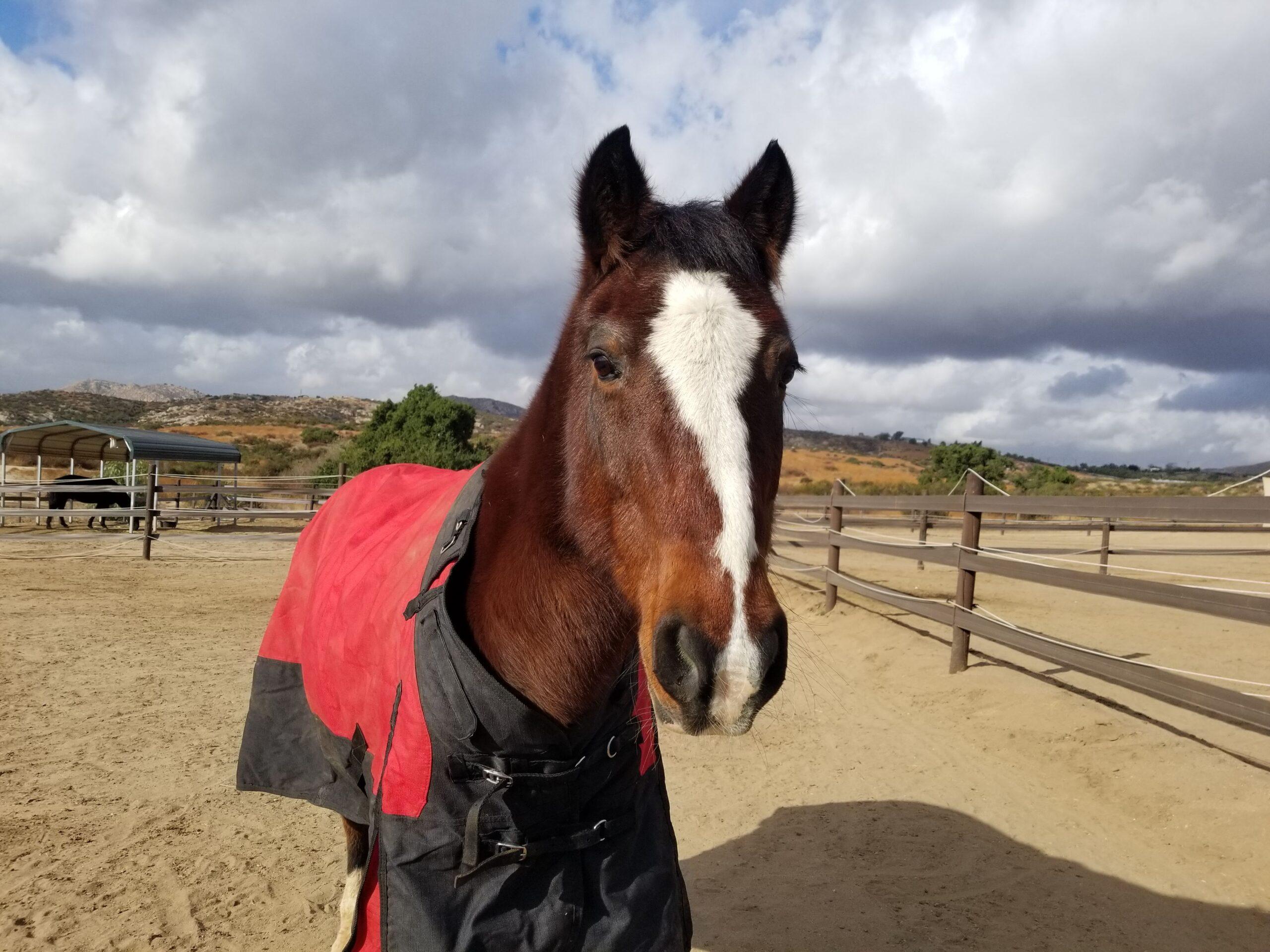 Waylon the horse