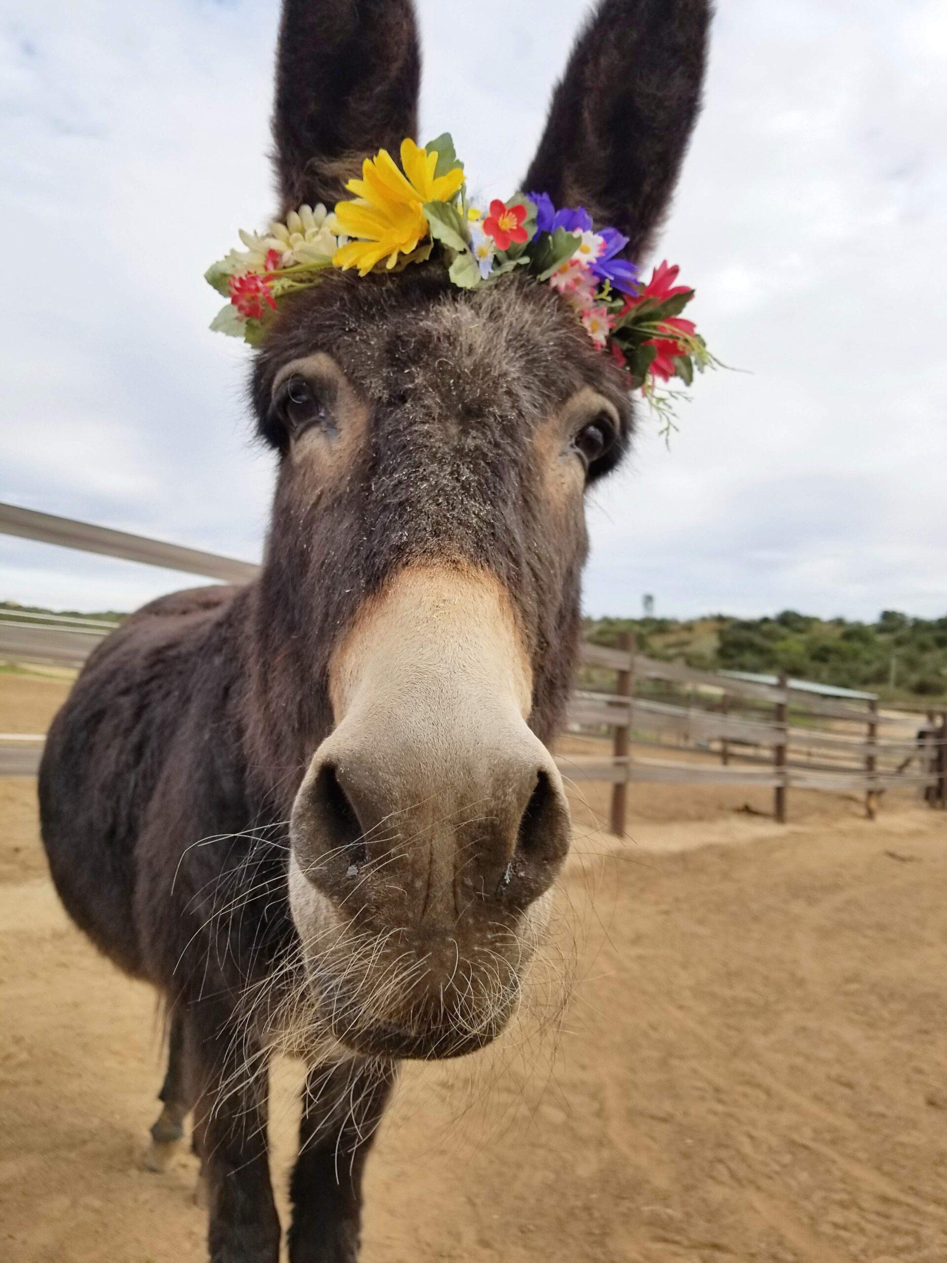 Punkin the donkey