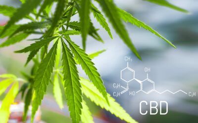 WHAT IS CBD AND WHAT DOES IT DO?