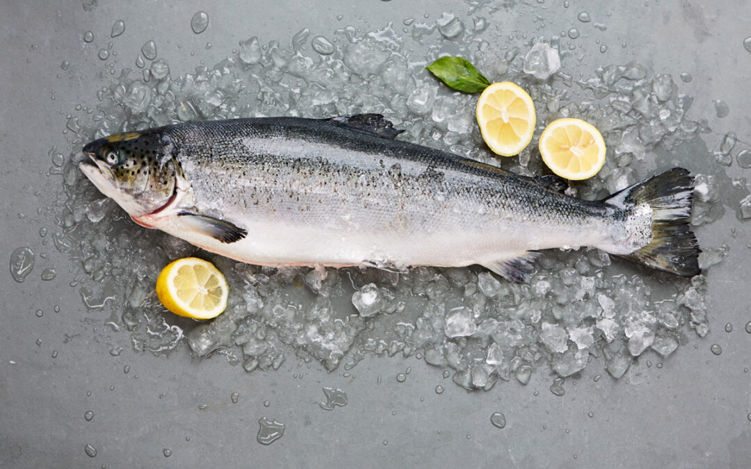 WHAT ARE THE BENEFITS OF SALMON OIL FOR ANIMALS?