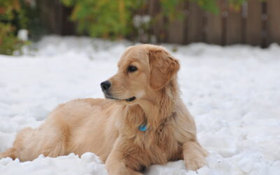 IS YOUR PET READY FOR COLD WEATHER?