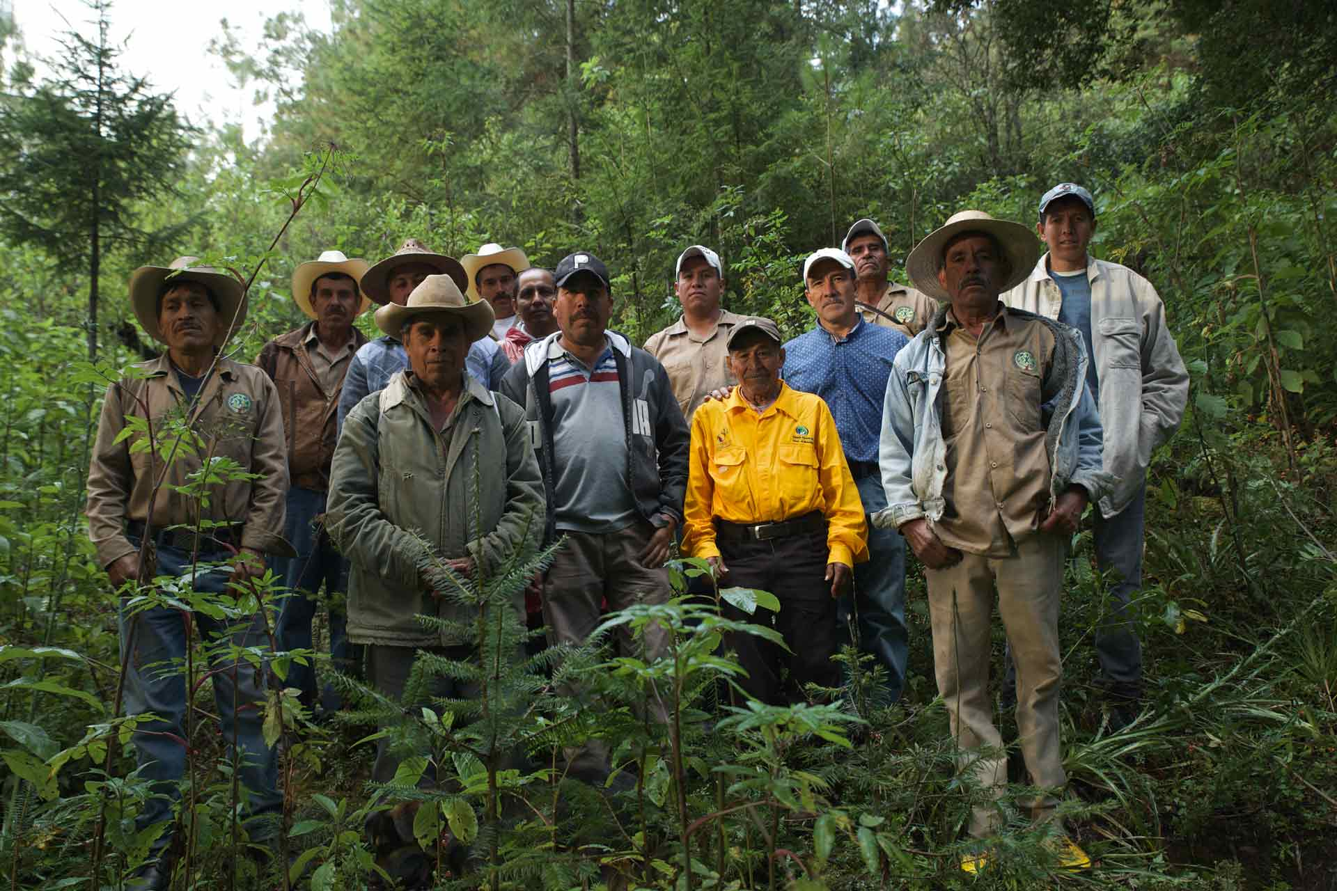 SIMA Classroom Owners-of-the-Forest-