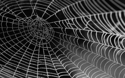 Weaving Webs & Breaking Chains
