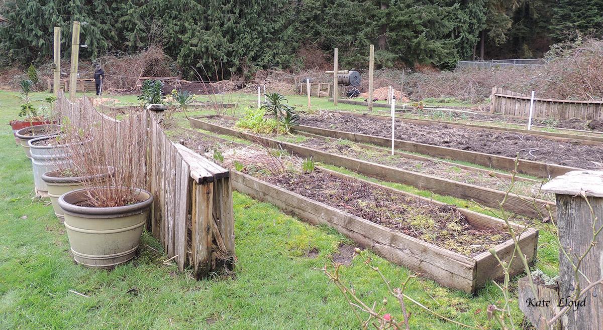 Our neighbor's dormant veggie garden awaiting spring's warmth.