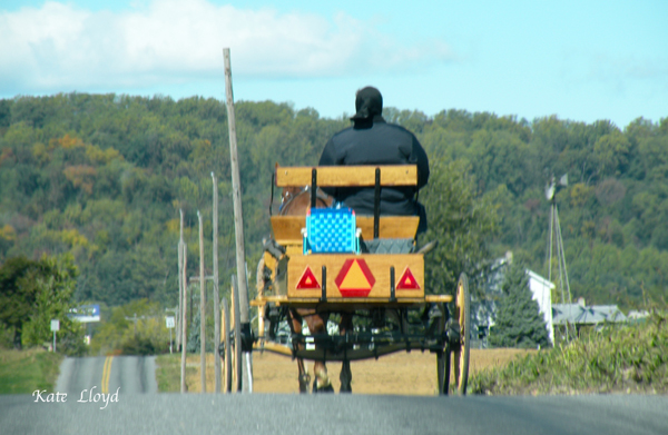 Amish woman driving an open buggy in Lancaster County, PA.
