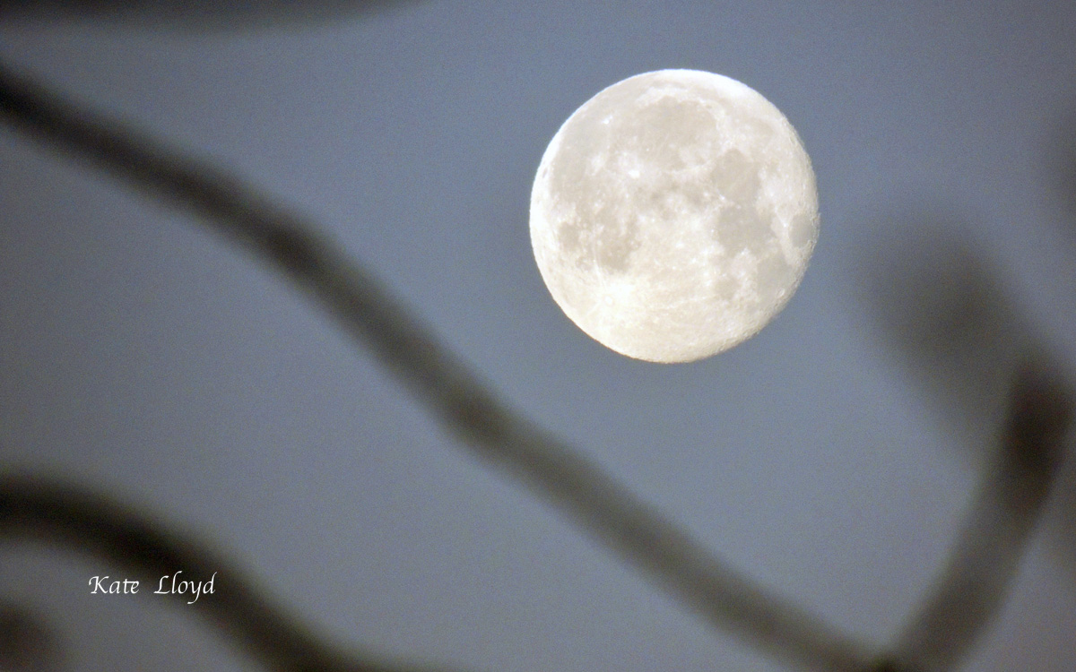 A few days ago, I checked out the window for rain and found the glorious moon!