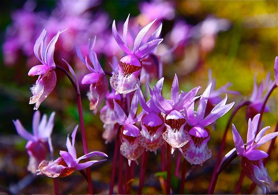 flowers wildlife retreat Great Bear Chalet