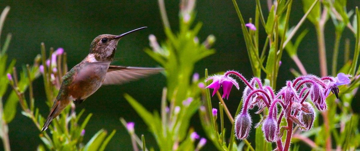 hummingbird birding close-up photography