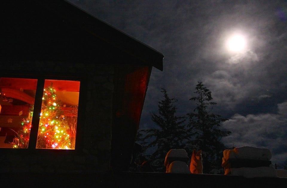 winter mink Great Bear open