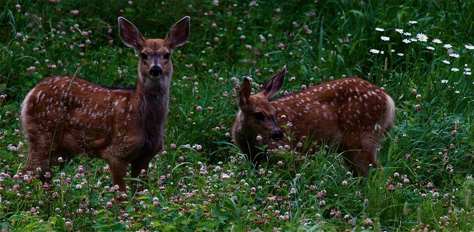 chalet great bear Tweedsmuir wilderness retreat deer