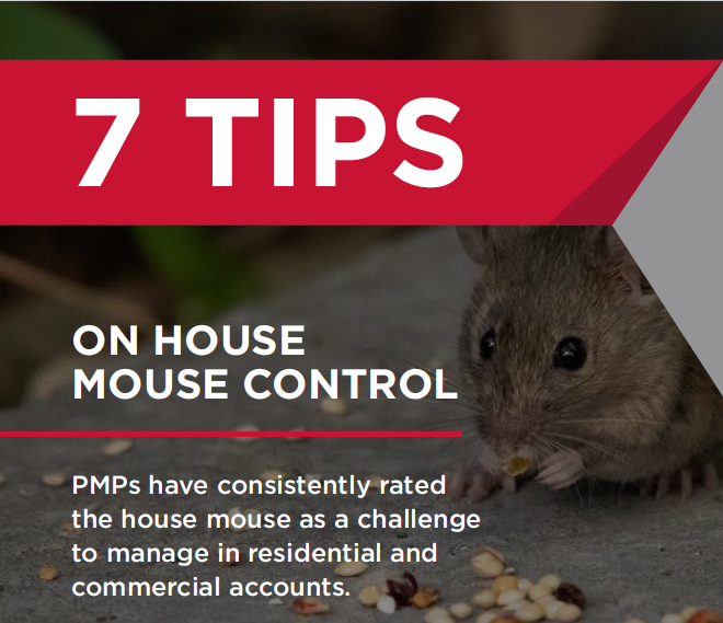 7_tips_house_mouse