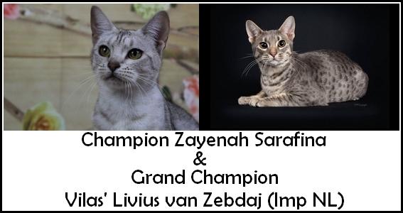 CH Sarafina GRCH Livius 2021