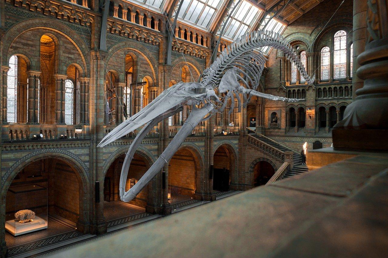 national history museum, london, uk