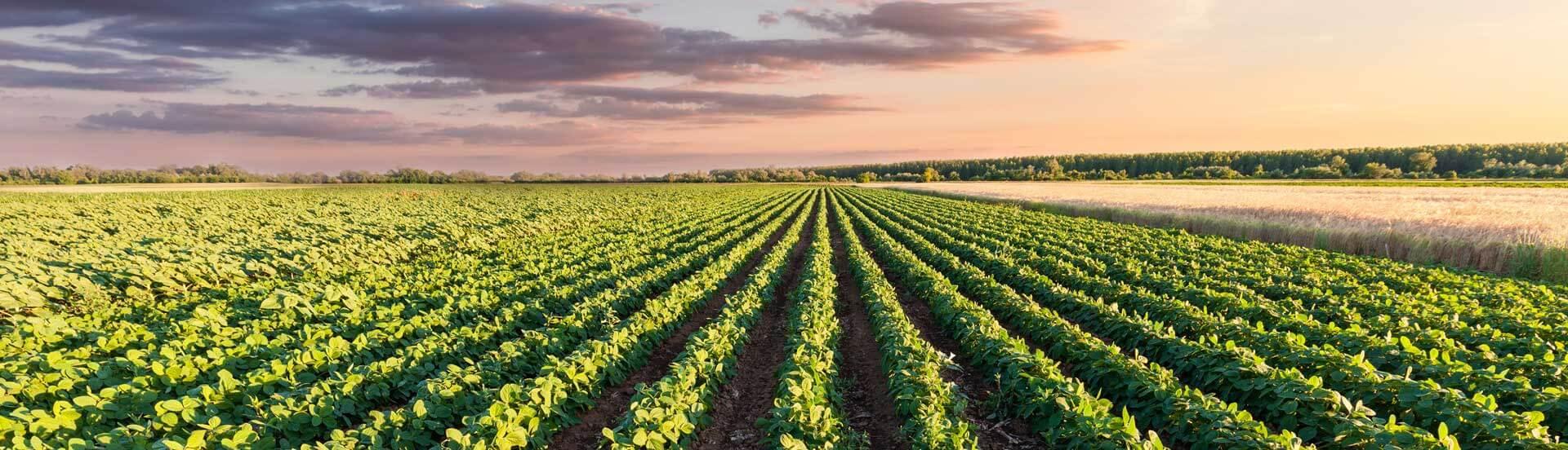 natural-solutions-pest-control-australia-queensland