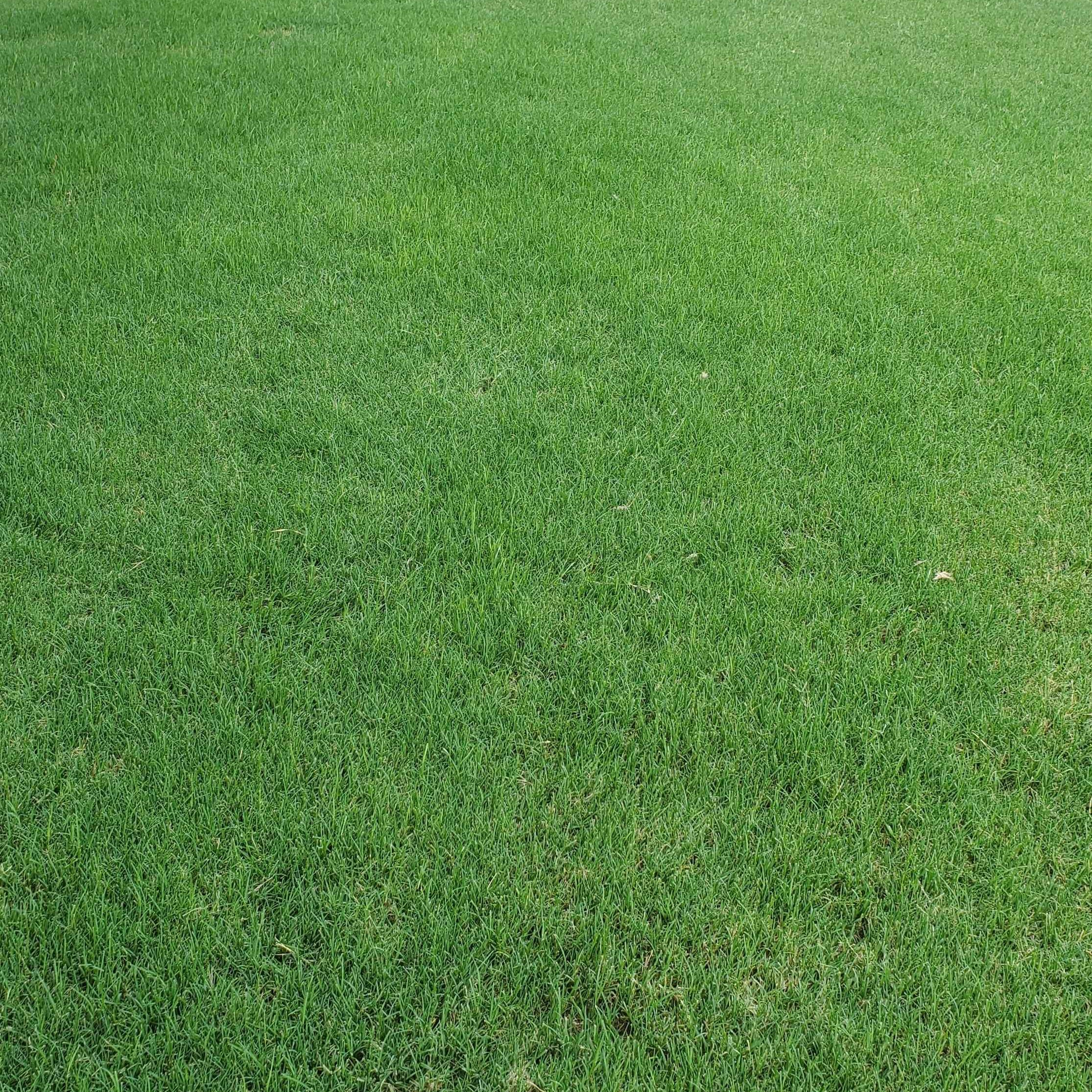 Do I really need to aerate my lawn?