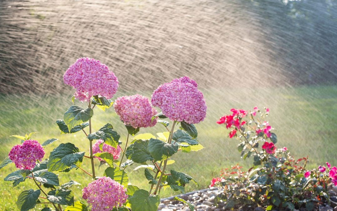 Understanding Watering is Critical to Your Lawn's Health