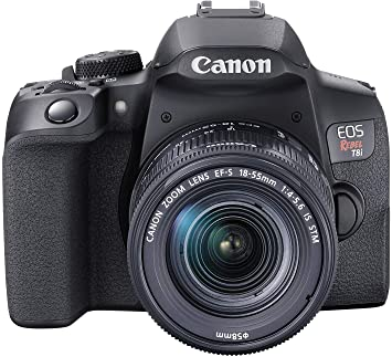 Canon EOS Rebel T8i a great all-round performer camera for dog photography