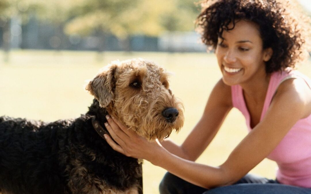 Longevity of a Company's Employees Is Important When Choosing a Dallas Dog Walker