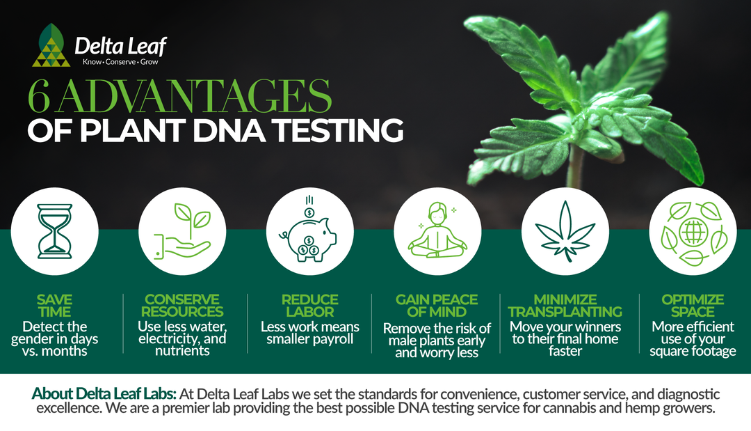 Why DNA Sex/Gender Testing Is A Game-Changer In Cannabis Cultivation