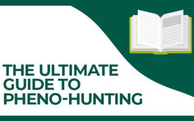 The Ultimate Guide To Pheno-Hunting