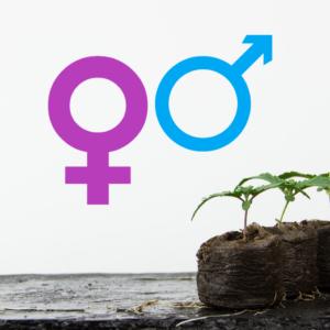 Plant DNA Sex/Gender Identification - Delta Leaf Labs