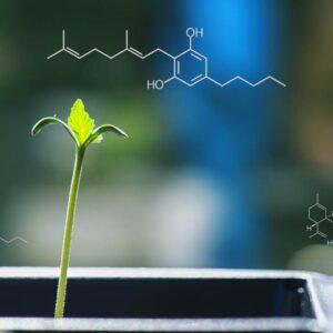 Cannabinoid Genotype Testing