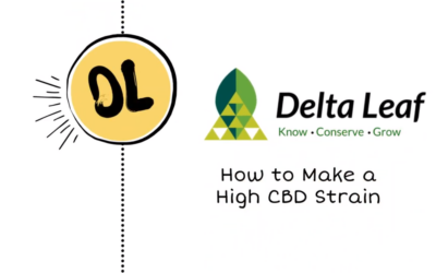 How to Breed a High CBD Strain