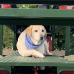 Trolley security ~Cooper