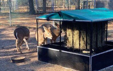 Popcorn Park Deer Get a Little Help from their Friends