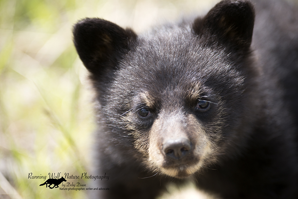 Cub staring up at me, beside my car. I was out the sunroof.