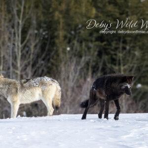Winter Wildlife Photography Workshops or Tours 2021/2022 Season
