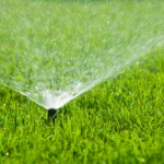 Automatic Sprinklers in Action