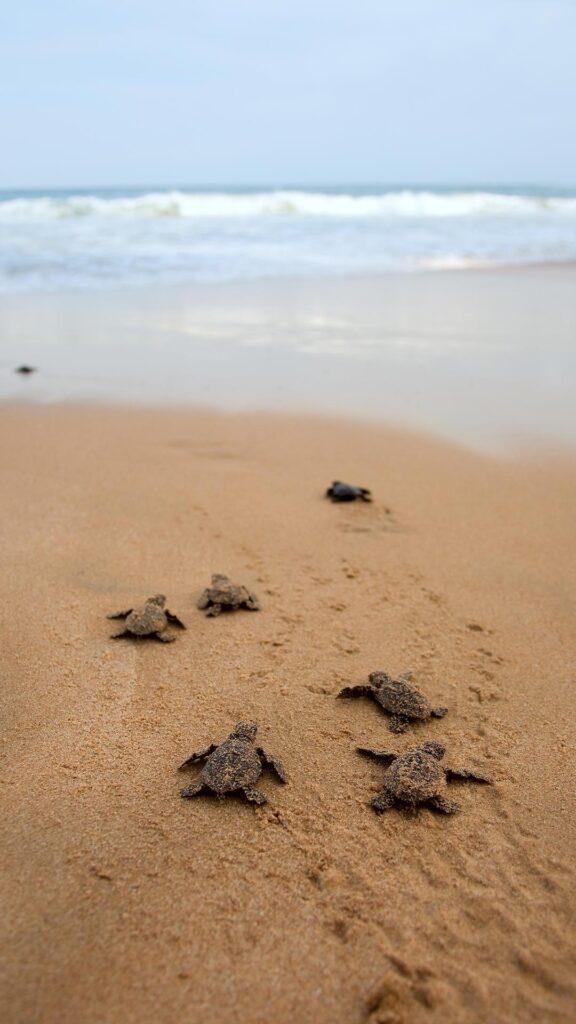 baby turtles on beach