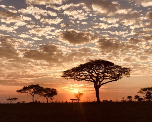 the sun setting through clouds behind acacia trees in the Central Serengeti