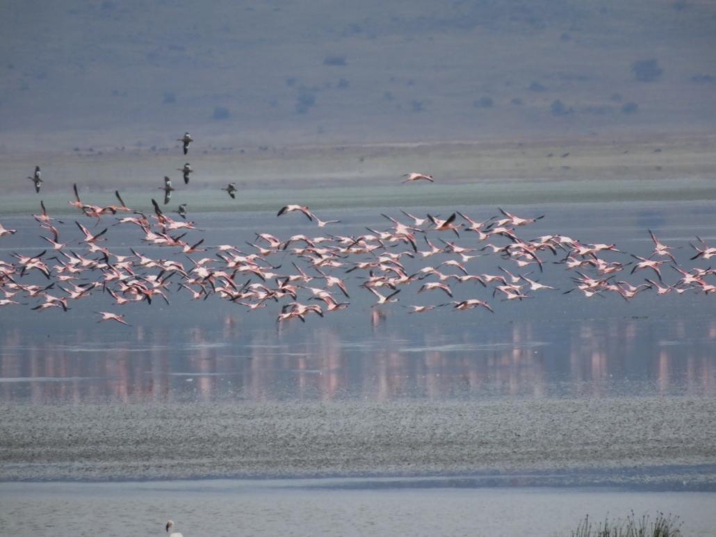 Flamingos in the Ngorongoro Crater