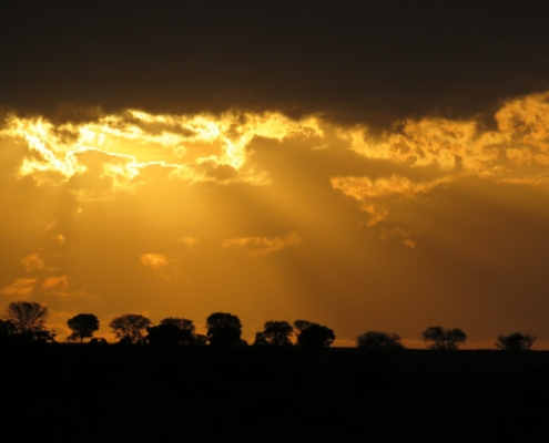setting sun rays over a line of trees in the Mara (Northern Serengeti)