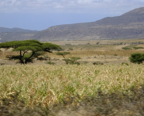 scenic shot of the Ndutu plains with hills in the background, a few small trees and green/gold grasses