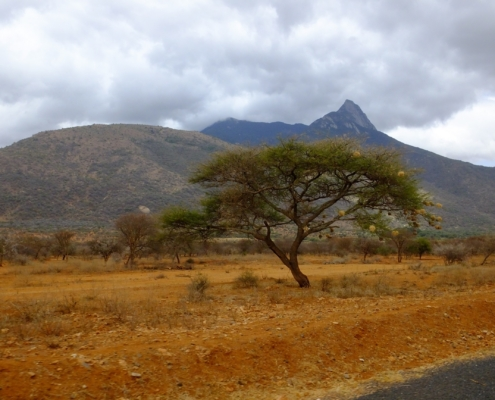 an acacia tree full of buffalo weaver nests in front of some mountains - very scenic