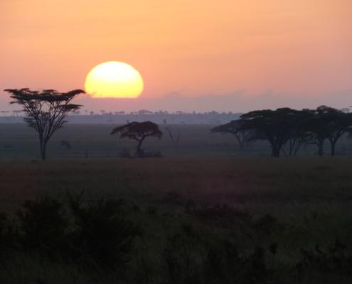 Sun rising behind acacia in the serengeti