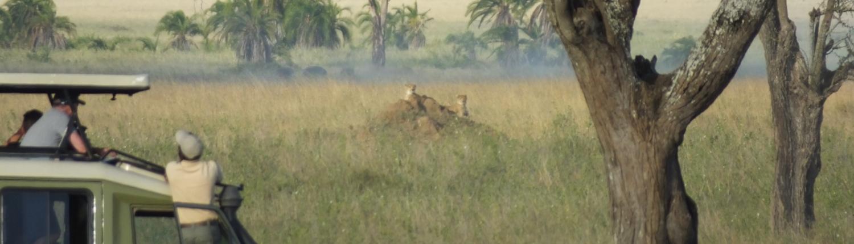 people in a safari jeep watching cheetah on a rock in the Serengeti