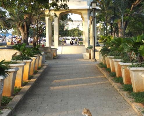 cat on a walkway looking towards the House of Wonders (Zanzibar)