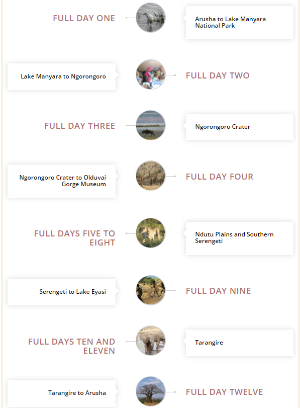 details of the safari itinerary following the great migration in the Ndutu plains of the southern serengeti and birding tour