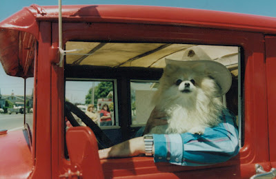 The 7 Weirdest Things People Do in Their Cars