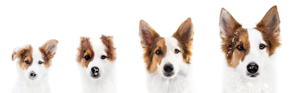 end of life care for your pet - Palo Verde Pet Clinic - Veterinary Clinic in Yuma, AZ