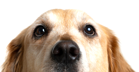 what vaccines does my dog need? - Palo Verde Pet Clinic - Veterinary Clinic in Yuma, AZ