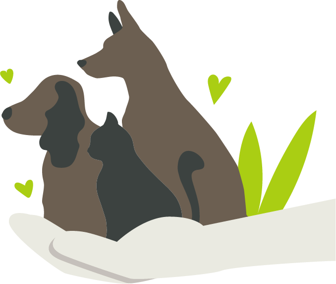 Palo Verde Pet Clinic | Pet Wellness & Veterinary Clinic in Yuma