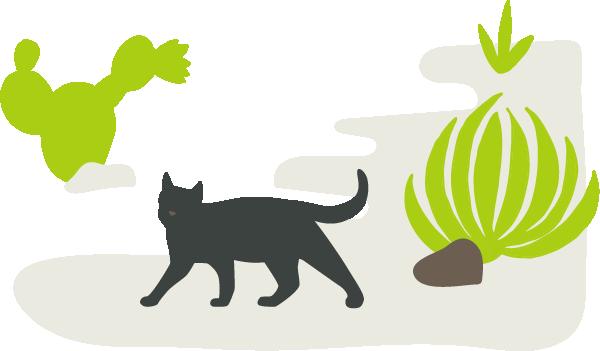 Veterinary Services | Pet Wellness & Veterinary Clinic in Yuma | Palo Verde Pet Clinic