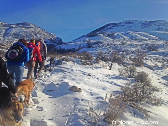 Parrish Canyon Trail, Parrish Creek Trail, Hiking in Utah with Dogs