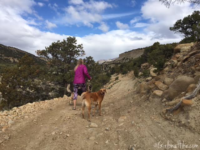 Gordon Creek Waterfalls, Utah, Hiking in Utah with Dogs