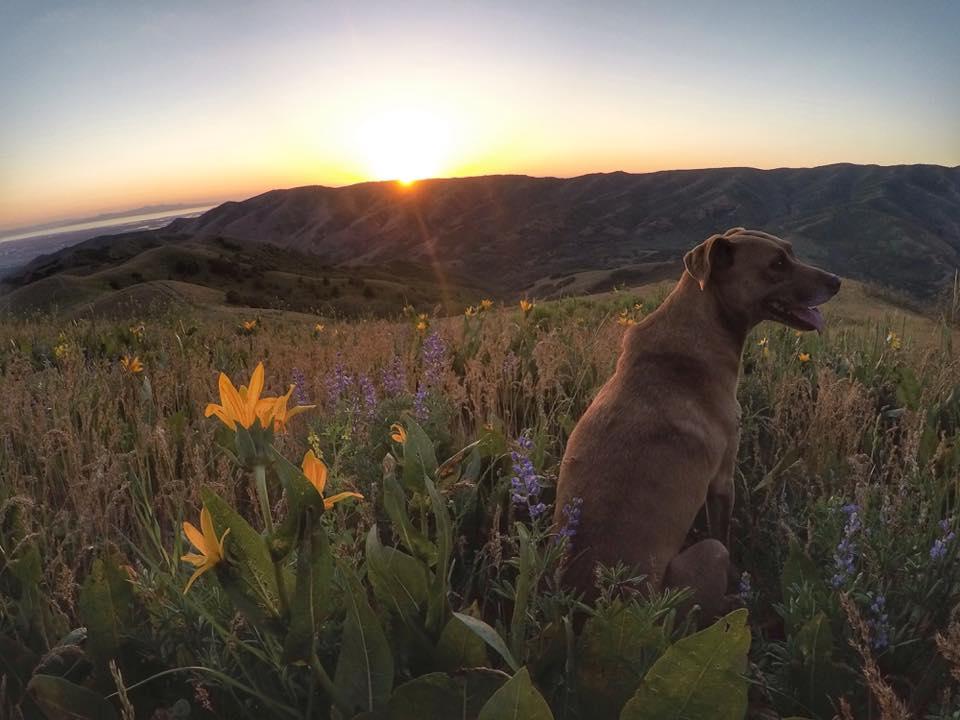 The Avenue's Twin Peaks, Salt Lake City, Utah, Hiking in Utah with Dogs
